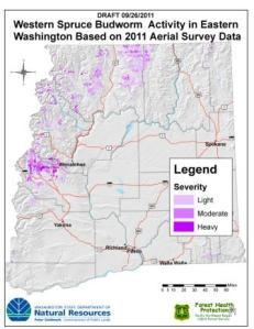 western spruce budworm outbreaks