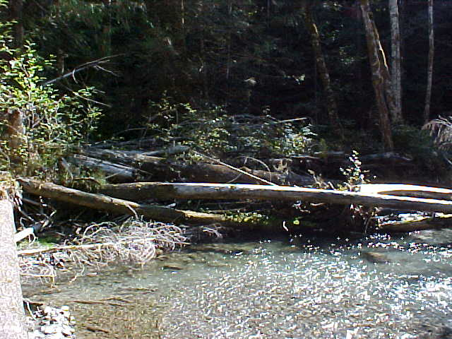 logs in stream help fish habitat