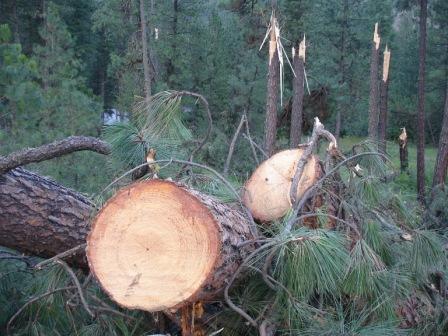 Broken trees and logs near Keller, Washington--July 2012