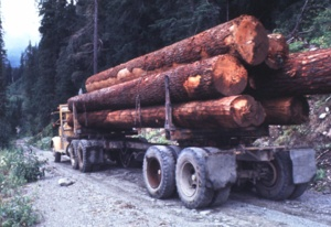 Logging Truck-Sultan closer