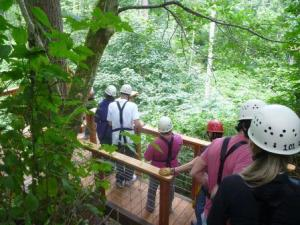 Tour guests experience the forest from a whole new perspective