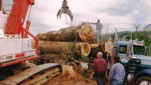 Timber harvest, 1996