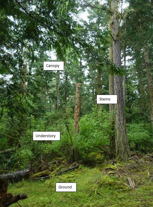 Four Conceptual Habitat types within a forest stand