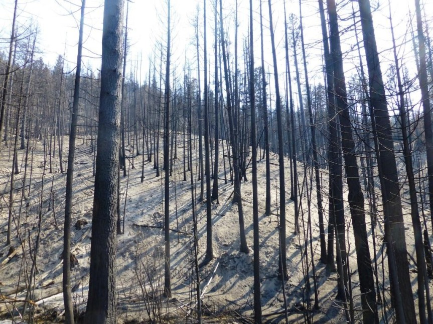 Burned forest on Loup Loup Pass