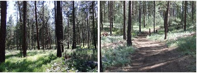 Grassy Meadow Trail,