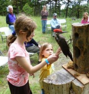 Youth learning about pileated woodpeckers