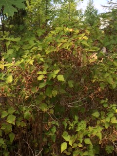 Deciduous shrubs and trees