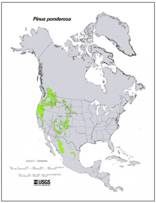 Range of the ponderosa pine. Image: USGS
