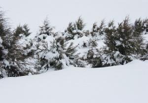 Davenport living snow fence