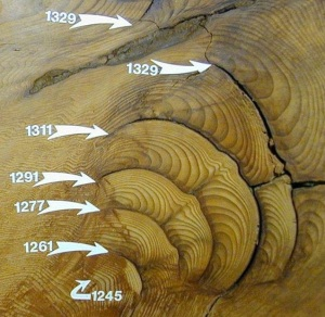 giant sequoia burn scars