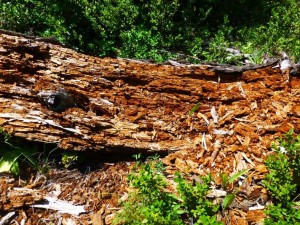 A Rotten Story: Forest Decomposition |