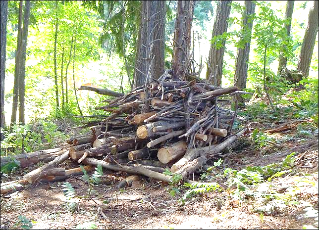 Healthy Habitat Piles — Or, Being Down With Downed Wood